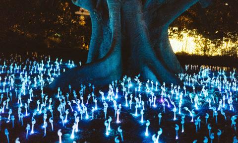 Immagine rappresentativa per il gioco dei sogni, un albero circondato da piante illuminate.