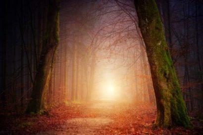 Immagine di una foresta che sembra magica.
